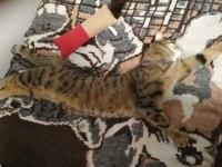 Kissanminttuöverit (lelusta)