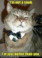 Snob Cat