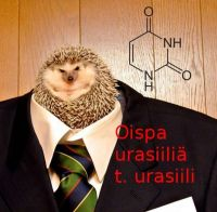 Career Hedgehog