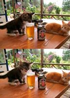 En nauti tästä :p t. kisse :3