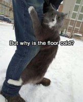 liian kylmää