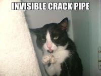 Kissa salaa huumeriippuvuutensa ovelalla tavalla >:3
