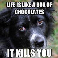 Koiran viisaus