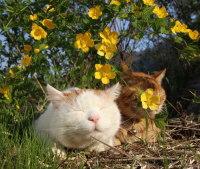 Kesäiset kukkaiskisset :3
