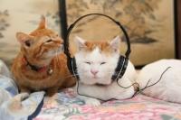 Tasapainoista kuuntelua :3
