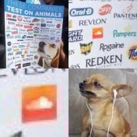 eläinkokeilua