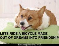 Ajakaamme polkupyörää unelmista tehtyä ystävyyteen :3