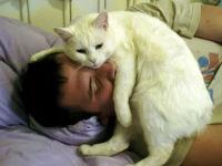 Nukku-Katti silmät sulkee :3