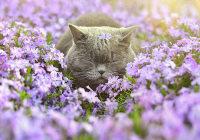 Elämän niityllä pitää muistaa haistella kukkia :3