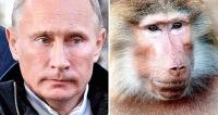 Putin peruna lisko