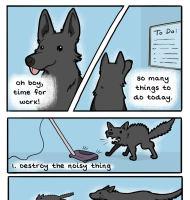 Koiran tuottelias päivä
