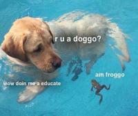 Doggontai