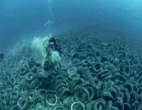Uusi korallilaji ilmestynyt