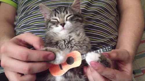 Opetellaan soittamaan kitaraa
