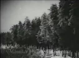 Ota meidät vastaan, Suomi-kaunotar