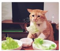 Syö salaattisi