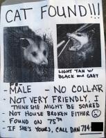 kissa löydetty!
