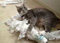 Tarvitsetko talouspaperia?
