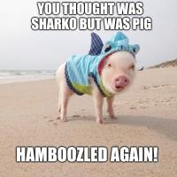 Hamboozled
