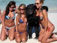 Apinakin tykkää
