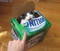 Et juo olusia tänään!