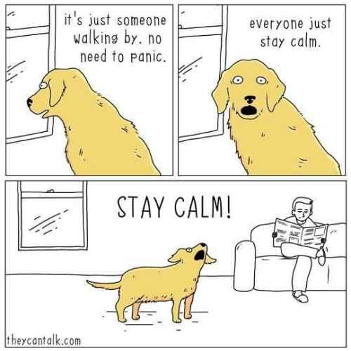 stay calm!