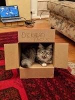 laatikossa