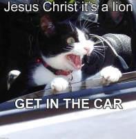 Tuu Jesse autoon!