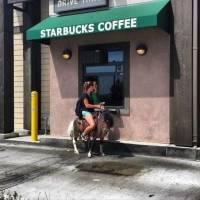Kahvia muulilla