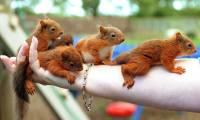 Oraveja