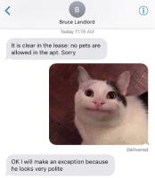 Hyvinkäyttäytyvä kissa