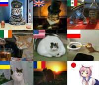 kissat maailmalla