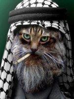Börheä jihadisti :3