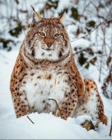 Wild chungus appears