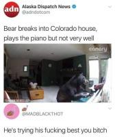 Soitteleva karhu