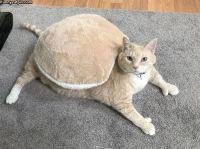 Kilpikonna :3