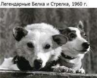 Belka ja Strelka