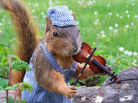 https://static.luolasto.org/file/mahti-bucket/4185/Squirrel-Playing-Violin-Funny-Picture.jpg