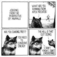 Susi ei ymmärrä