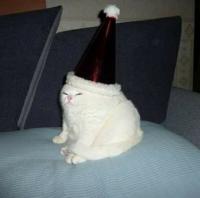 Hattu :D