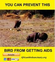 Pelastakaa linnut