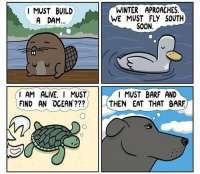 Eläinmaailman viisautta