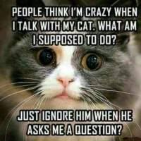kissaihmiset