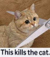 tämä tappaa kissan