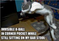 Kissat puuhaa näkymättömiä asioita
