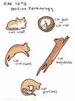 Kissakuvakokoelma