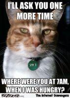 Kissakuvakokoelma (keskiviikon yliannostus) :33