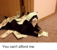 You can't afford me >:3