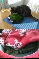 Kissakuvia ja gifejä