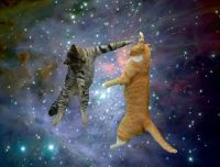 Kissat asentavat näkymätöntä ikkunaa avaruuteen